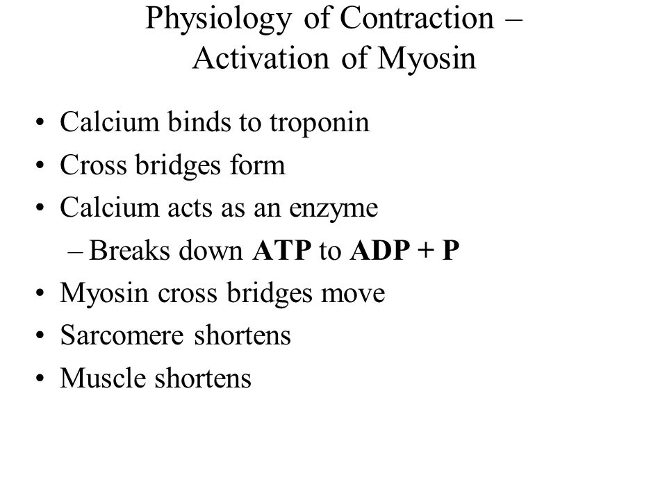 Physiology of Contraction – Activation of Myosin