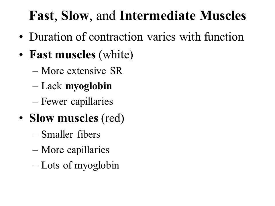 Fast, Slow, and Intermediate Muscles