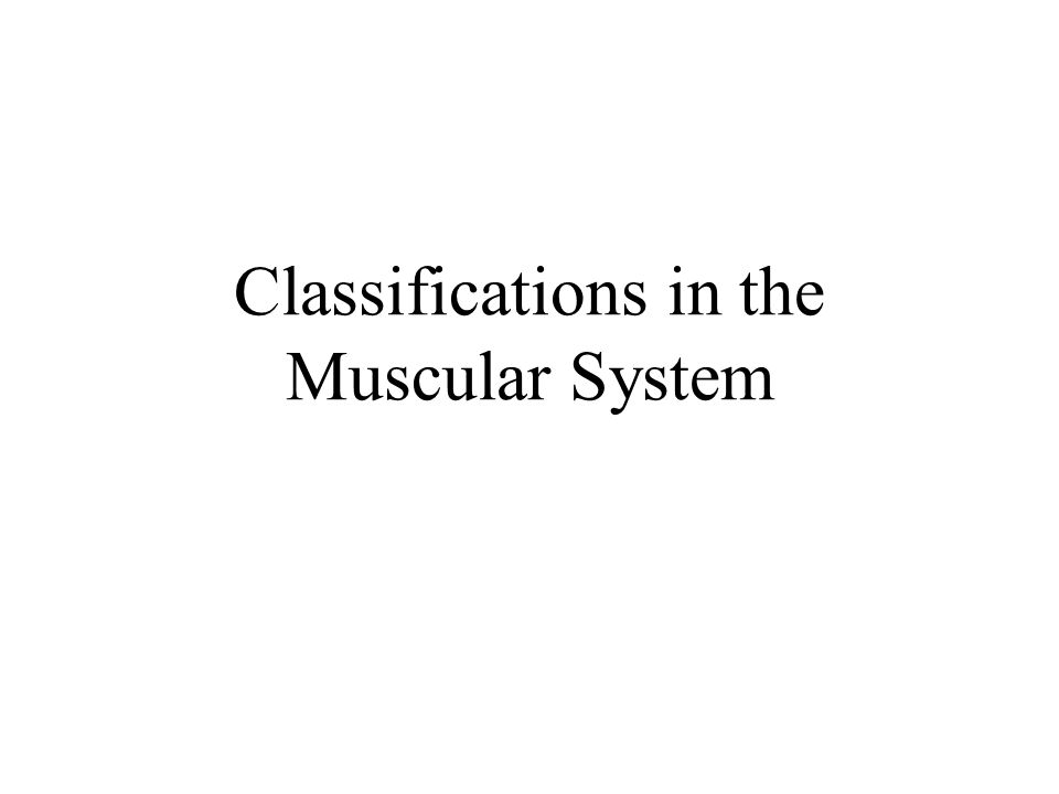 Classifications in the Muscular System
