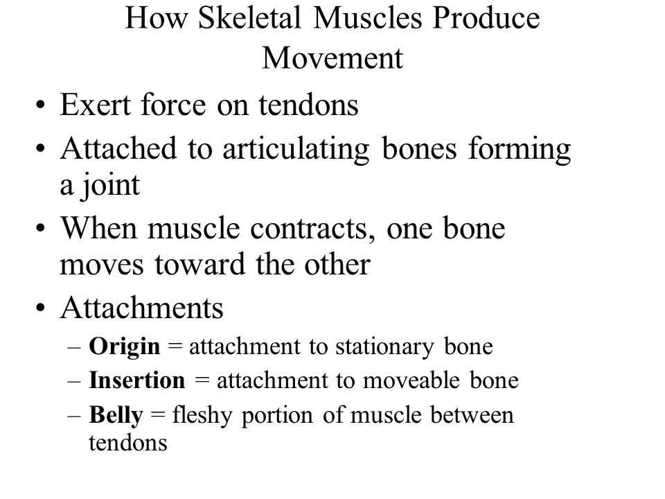 How Skeletal Muscles Produce Movement