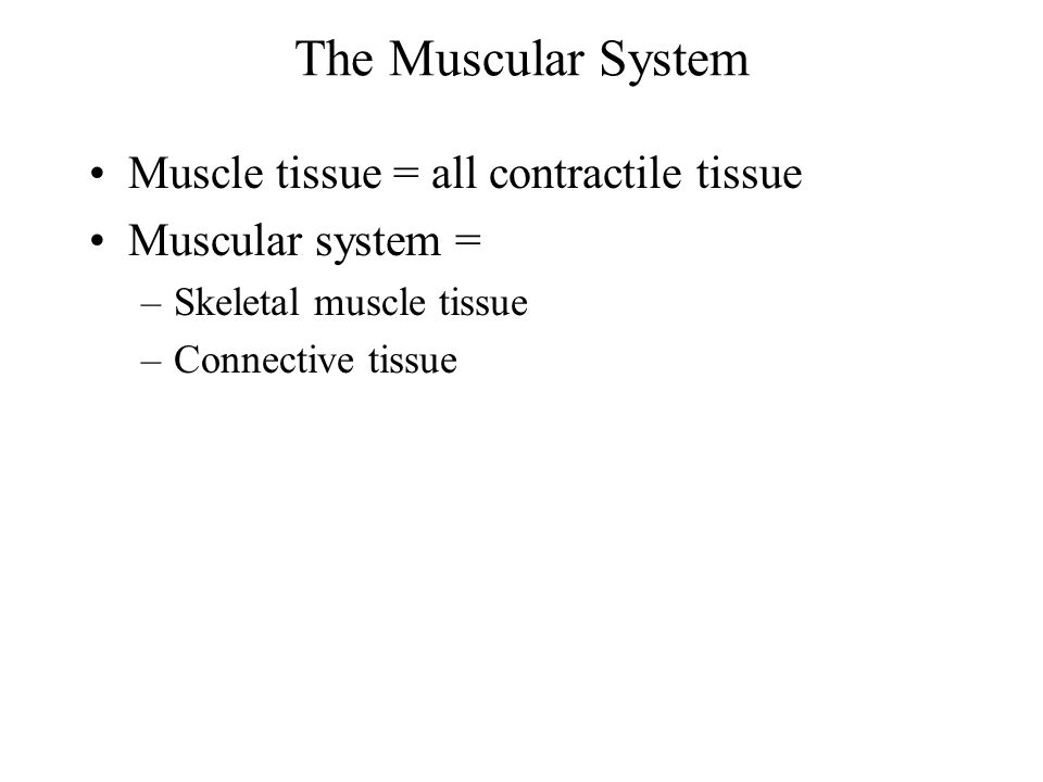 The Muscular System Muscle tissue = all contractile tissue
