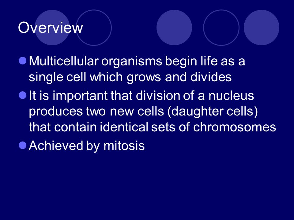 Overview Multicellular organisms begin life as a single cell which grows and divides.
