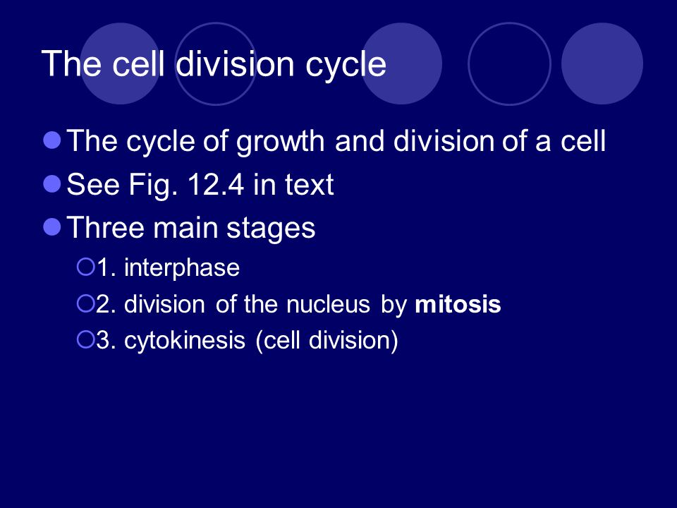 The cell division cycle