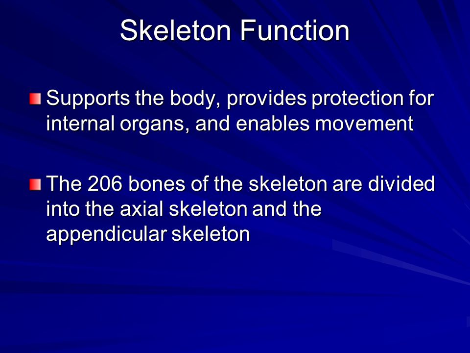 Skeleton Function Supports the body, provides protection for internal organs, and enables movement.