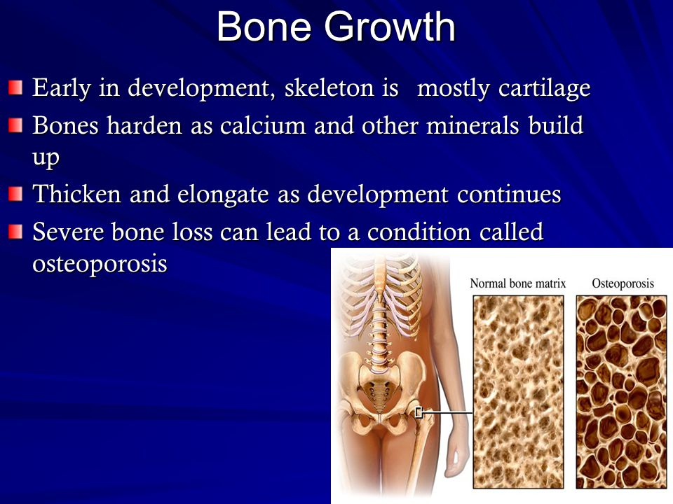 Bone Growth Early in development, skeleton is mostly cartilage