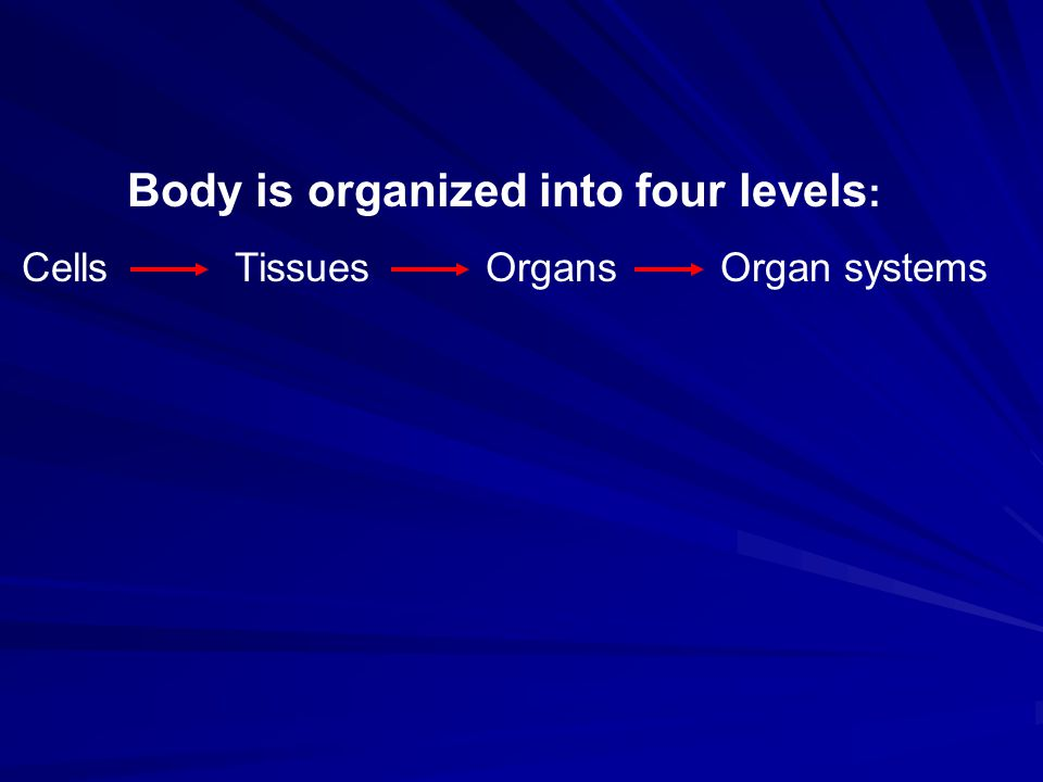 Body is organized into four levels: