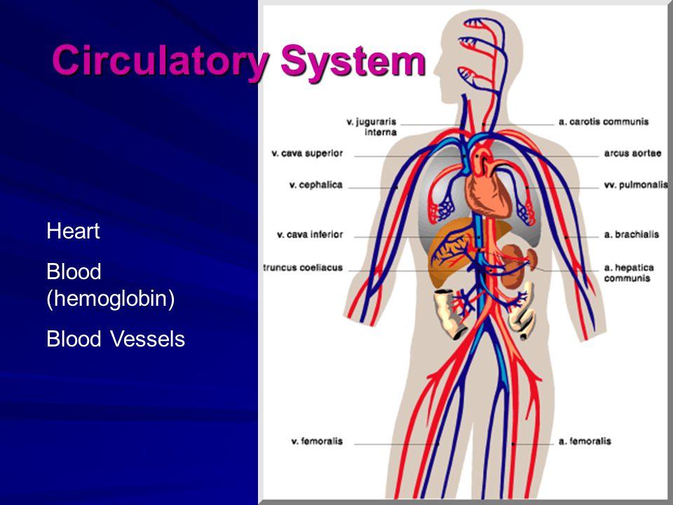 Circulatory System Heart Blood (hemoglobin) Blood Vessels