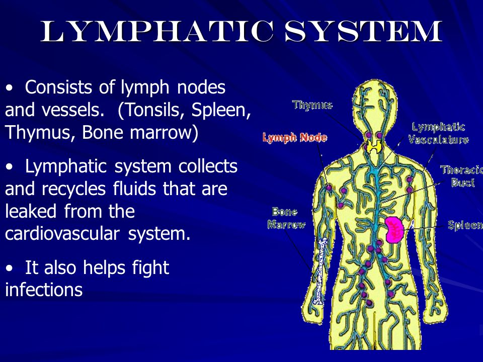 Lymphatic system Consists of lymph nodes and vessels. (Tonsils, Spleen, Thymus, Bone marrow)