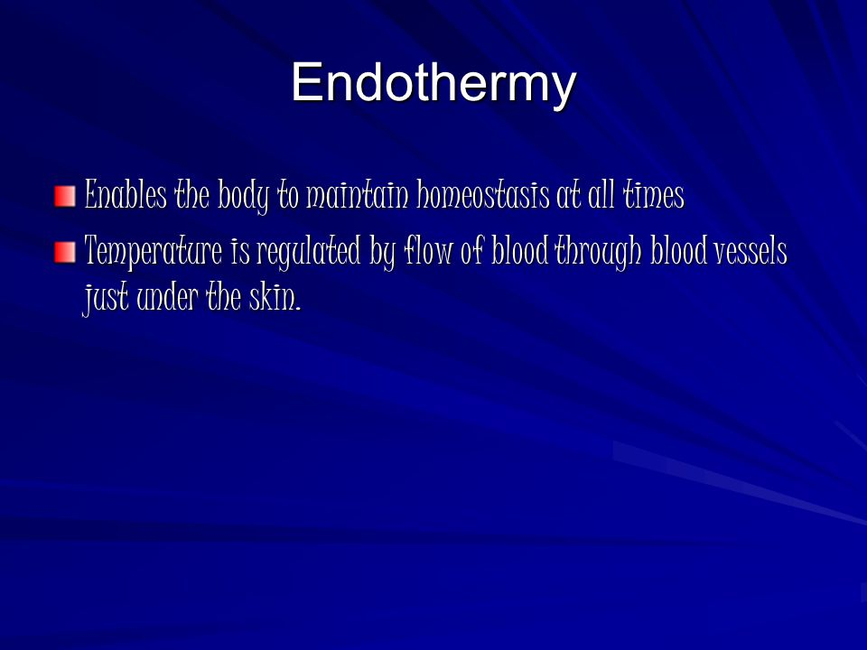 Endothermy Enables the body to maintain homeostasis at all times