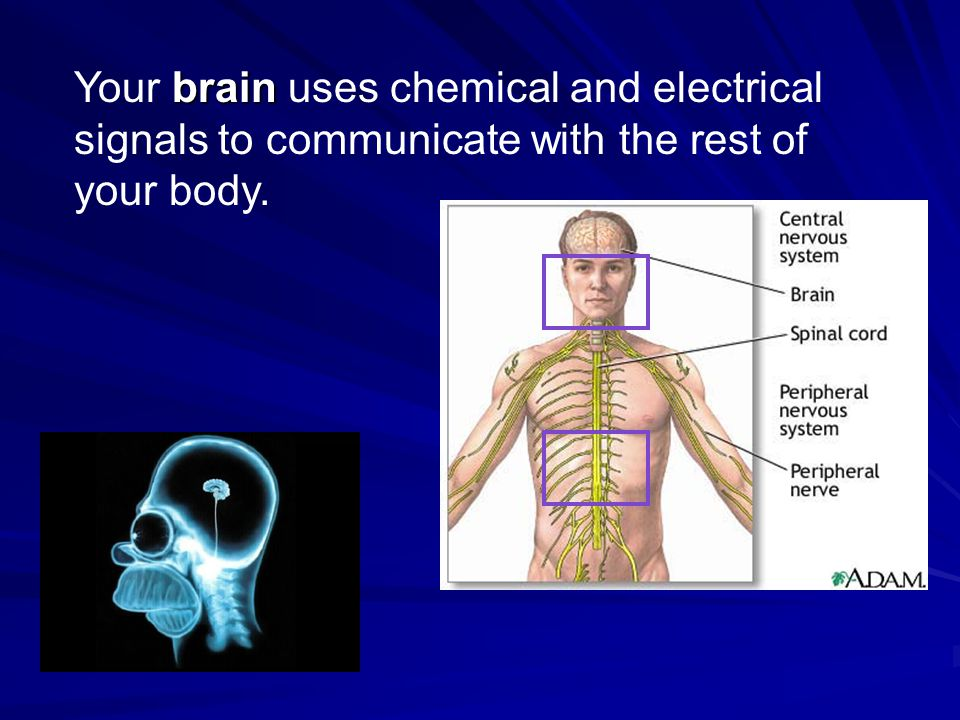 Your brain uses chemical and electrical signals to communicate with the rest of your body.