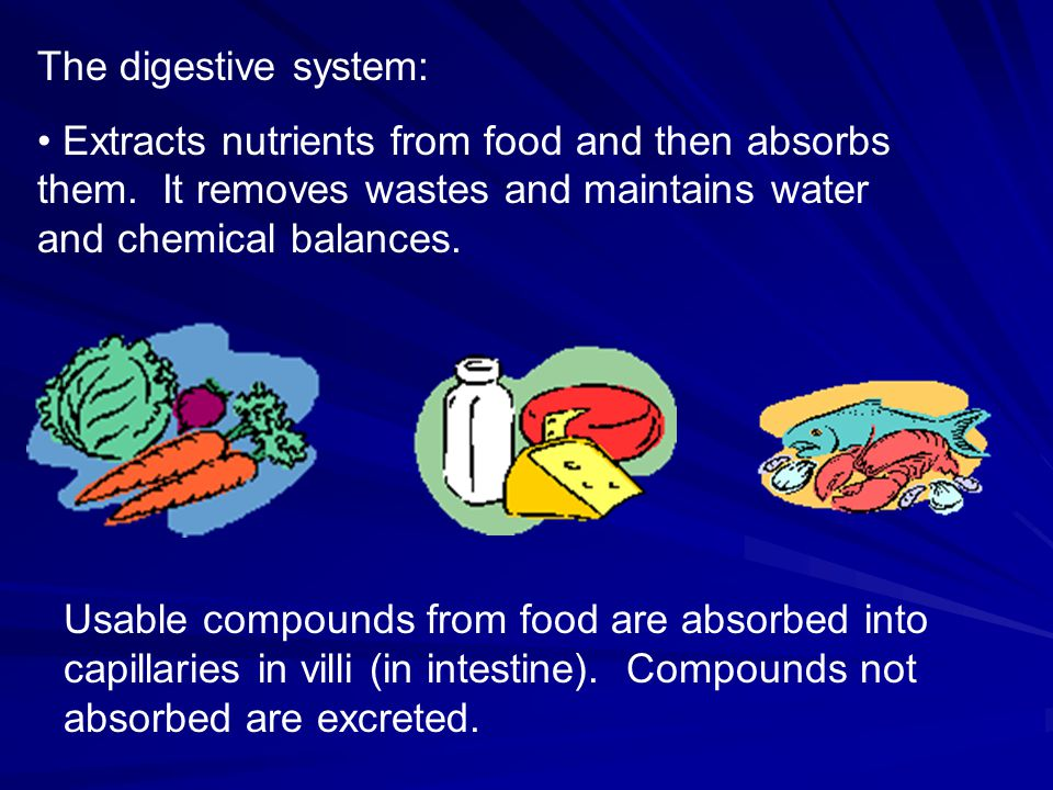 The digestive system: Extracts nutrients from food and then absorbs them. It removes wastes and maintains water and chemical balances.