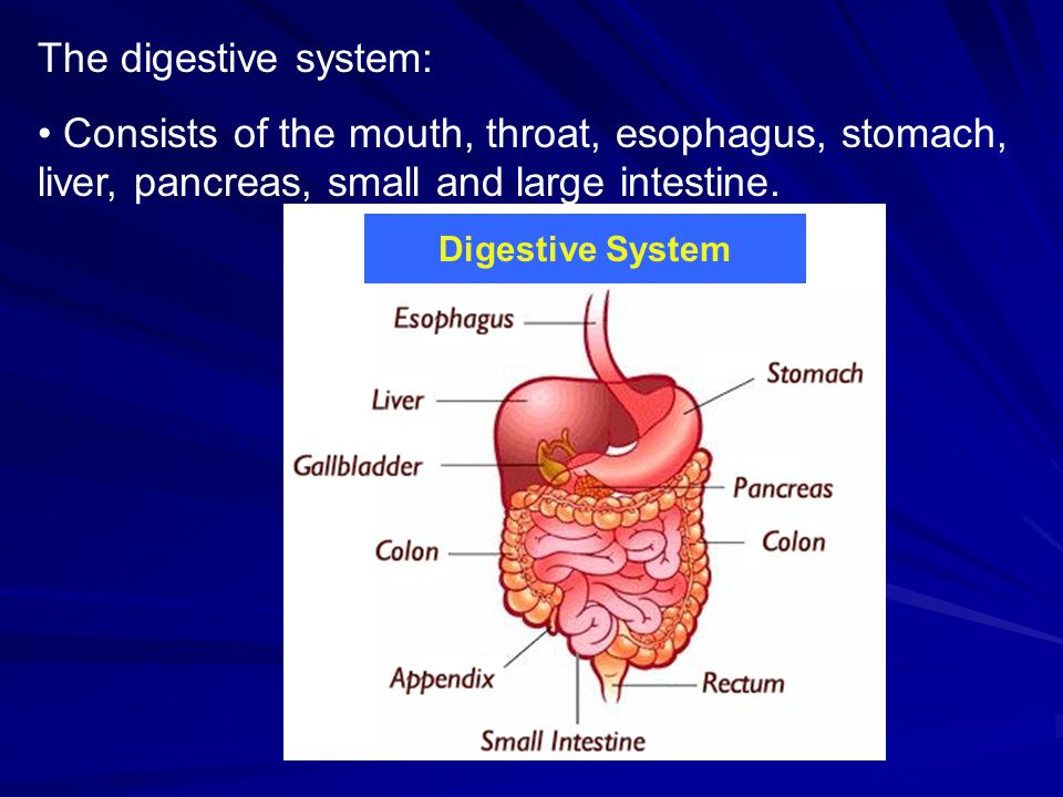 BODY SYSTEMS. - ppt download