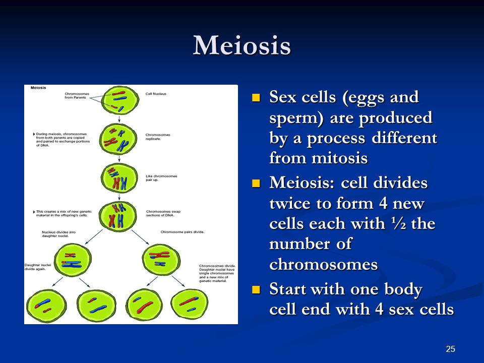 Meiosis Sex cells (eggs and sperm) are produced by a process different from mitosis.