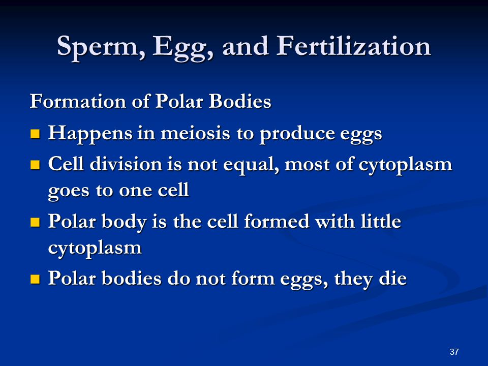 Sperm fusing to polar body words