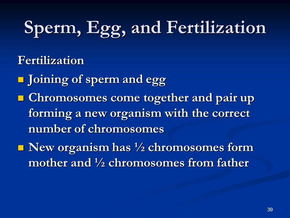Sperm, Egg, and Fertilization