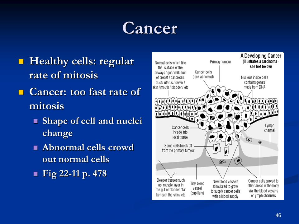 Cancer Healthy cells: regular rate of mitosis