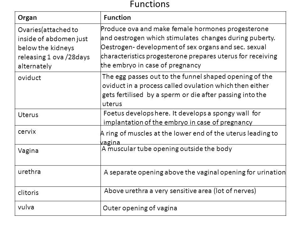 Functions Organ Function