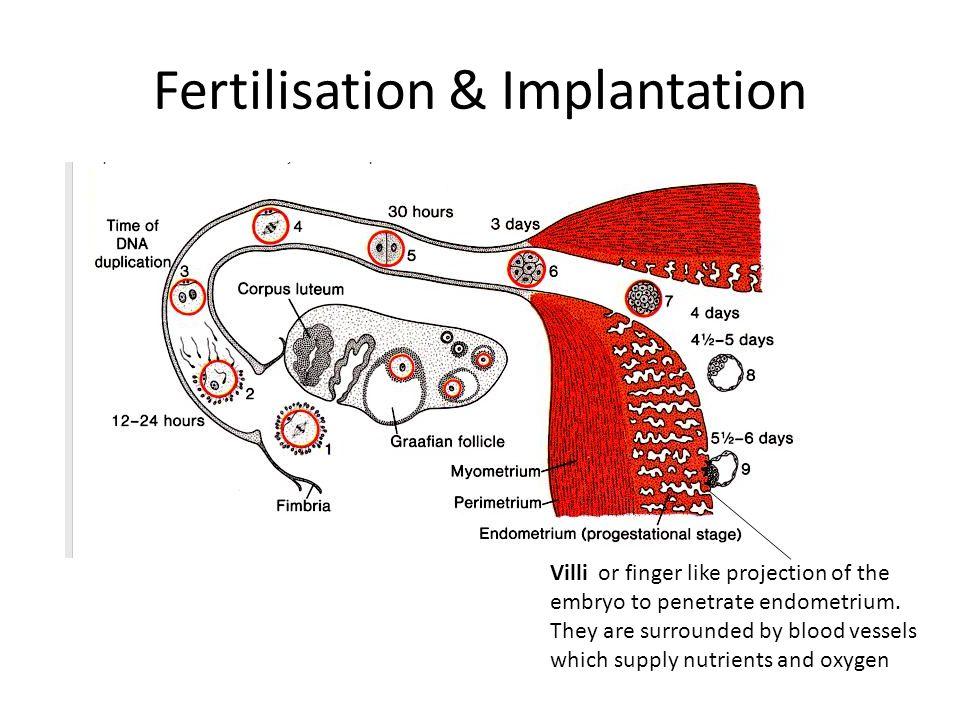 Fertilisation & Implantation