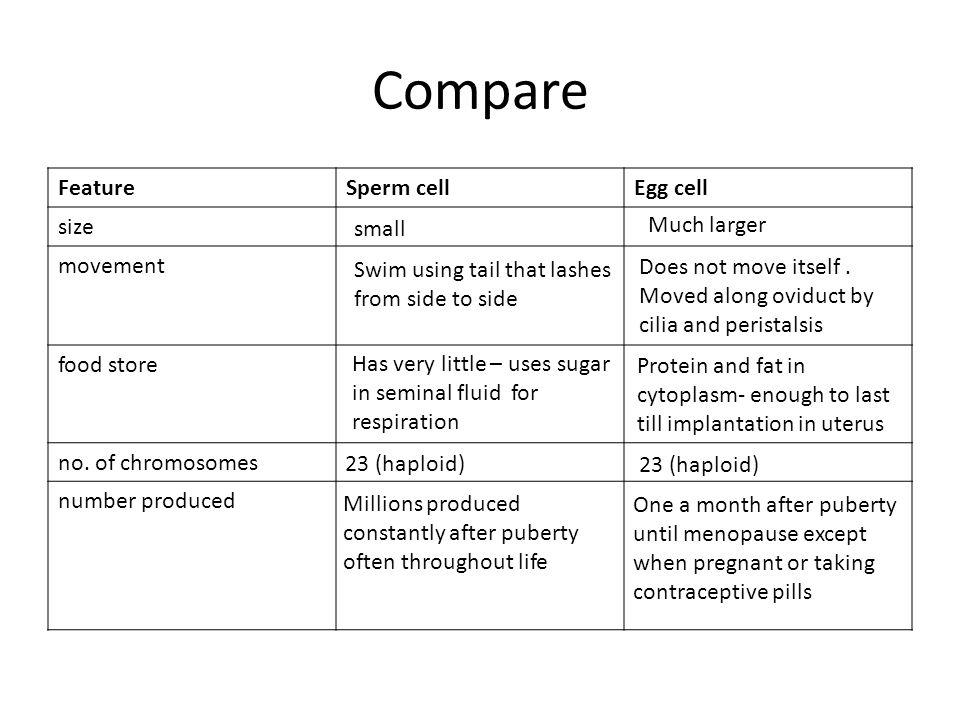 Compare Feature Sperm cell Egg cell size movement food store