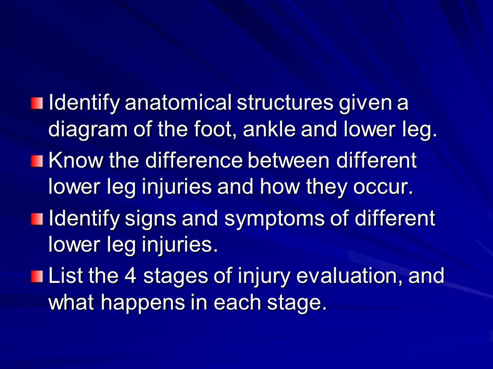 Identify anatomical structures given a diagram of the foot, ankle and lower leg.