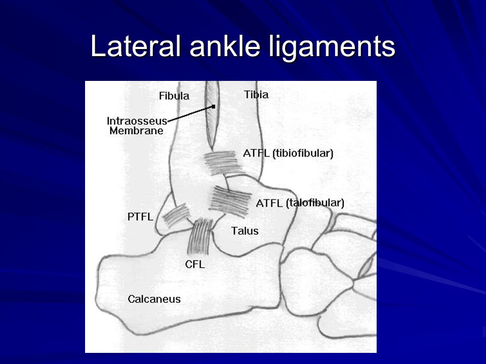 Lateral ankle ligaments