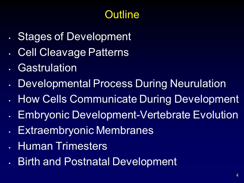 Outline Stages of Development. Cell Cleavage Patterns. Gastrulation. Developmental Process During Neurulation.