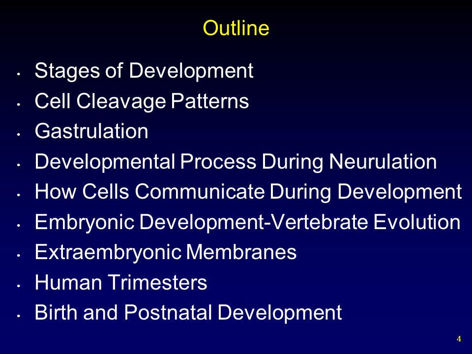 Outline Stages of Development. Cell Cleavage Patterns. Gastrulation. Developmental Process During Neurulation.