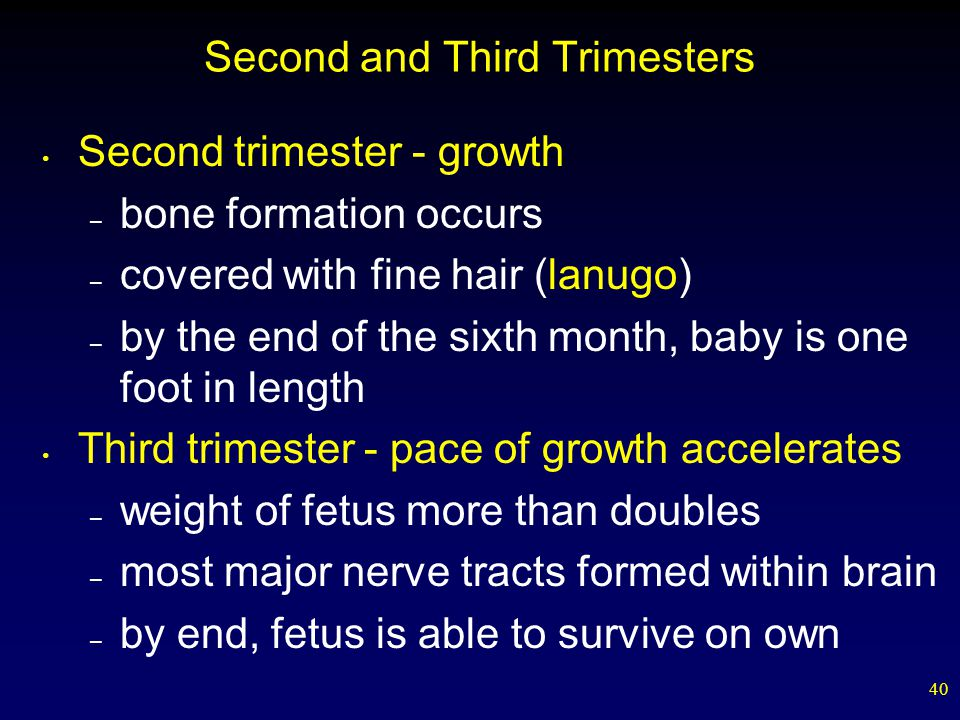 Second and Third Trimesters
