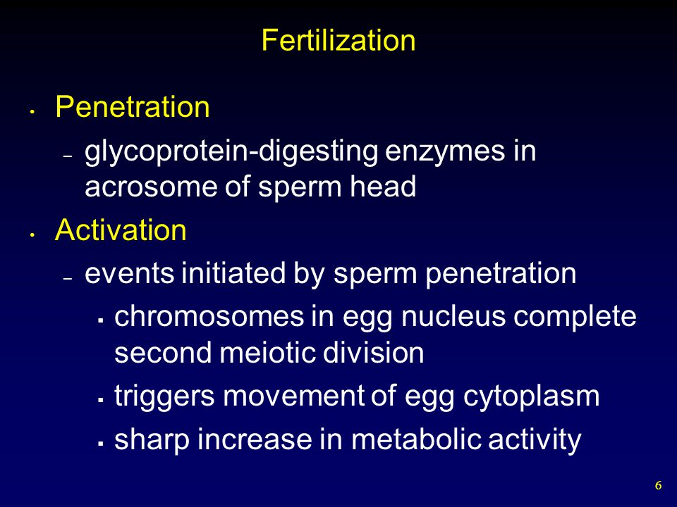 Fertilization Penetration. glycoprotein-digesting enzymes in acrosome of sperm head. Activation. events initiated by sperm penetration.