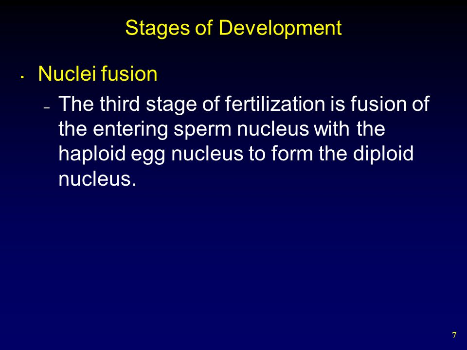 Stages of Development Nuclei fusion.