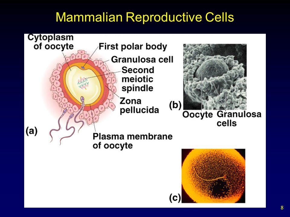 Mammalian Reproductive Cells