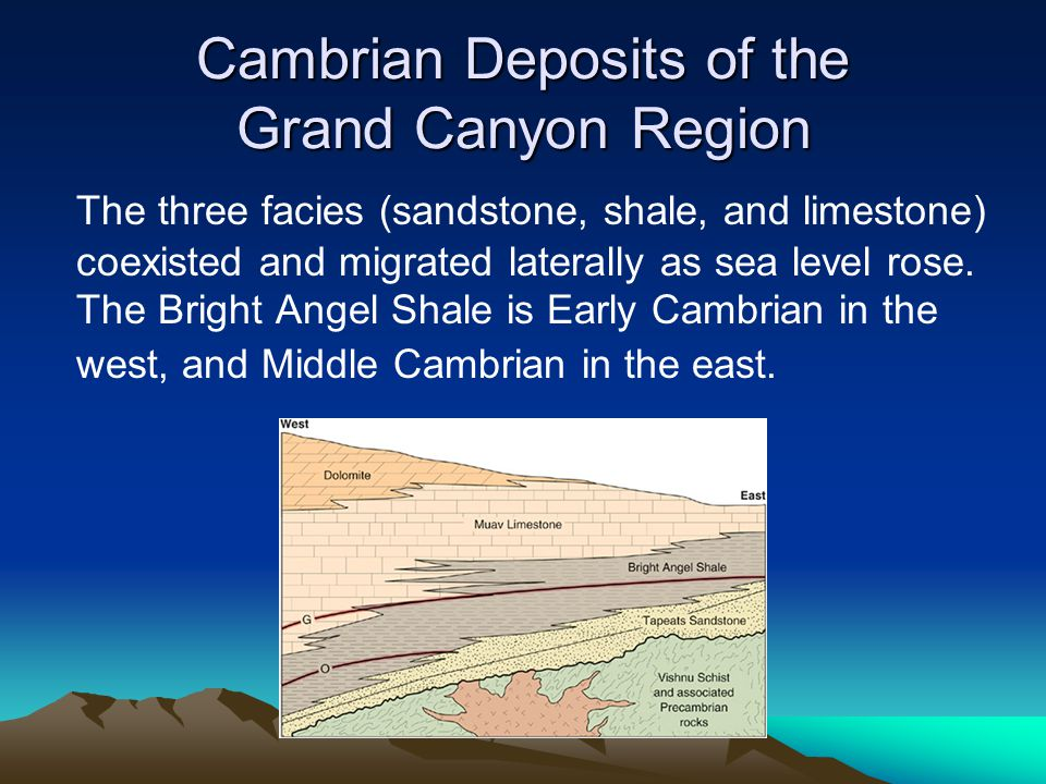 Cambrian Deposits of the Grand Canyon Region