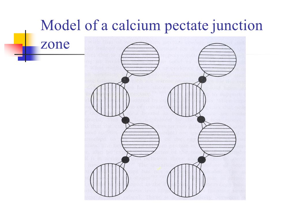 Model of a calcium pectate junction zone