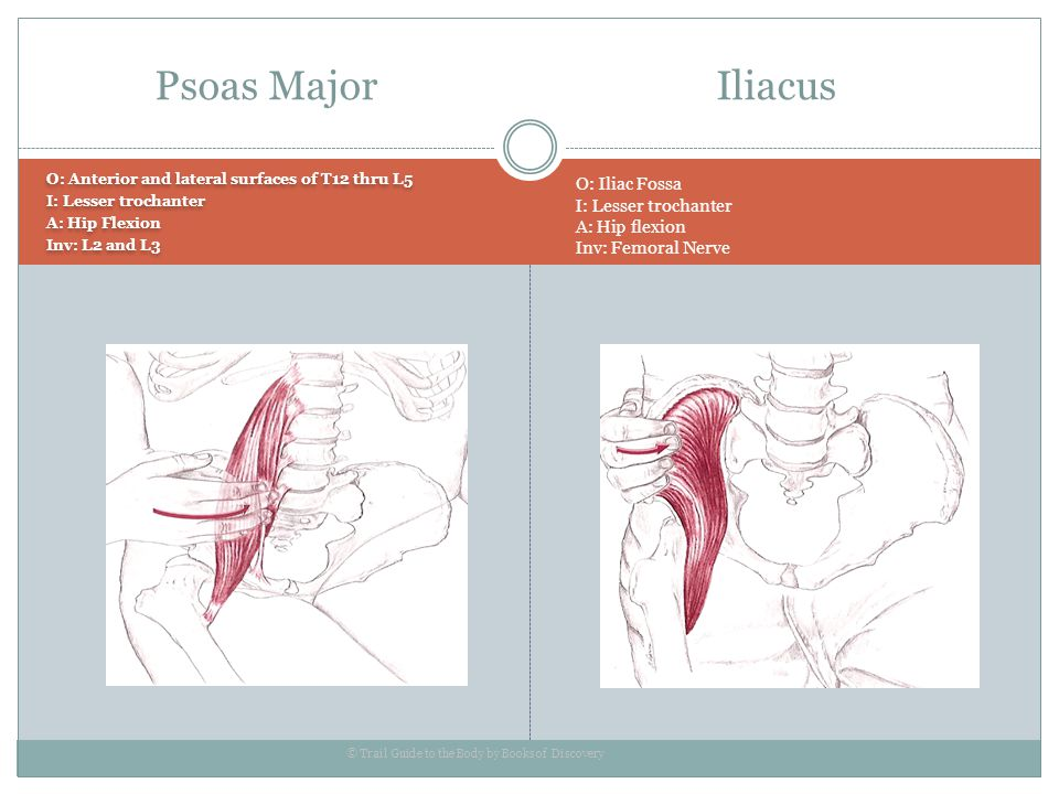 Psoas Major Iliacus O: Iliac Fossa I: Lesser trochanter A: Hip flexion