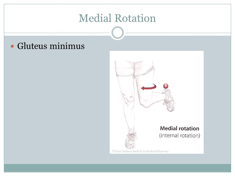 Medial Rotation Gluteus minimus