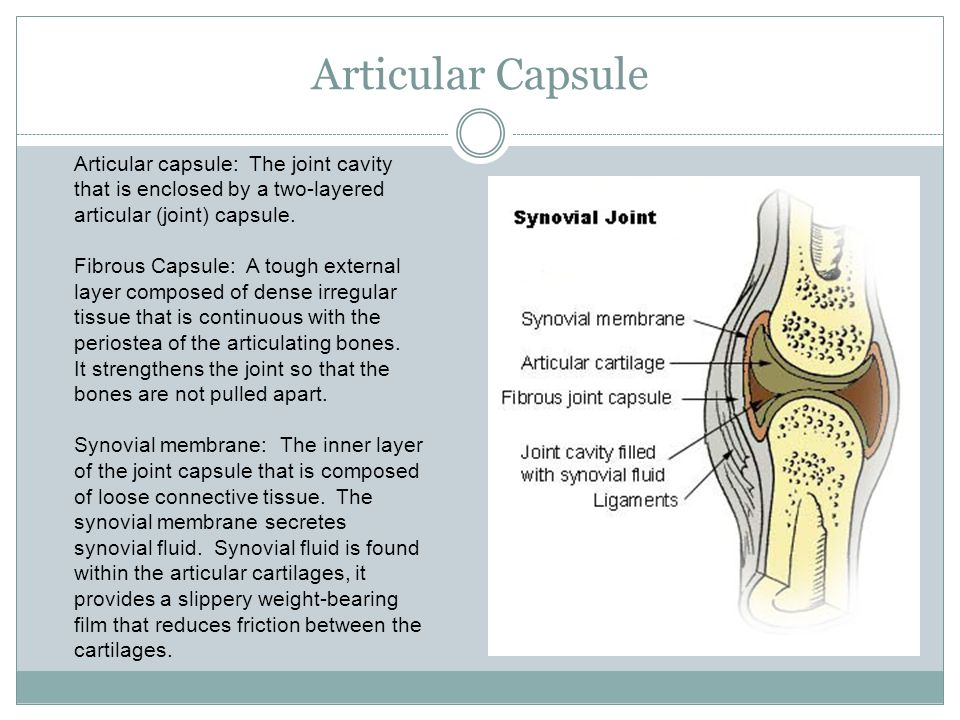 Articular Capsule Articular capsule: The joint cavity that is enclosed by a two-layered articular (joint) capsule.