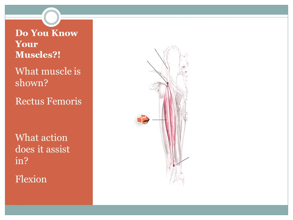 Do You Know Your Muscles !