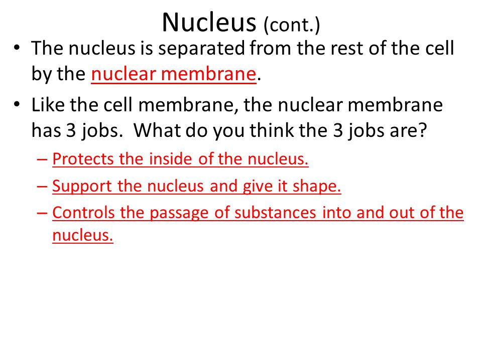 Nucleus (cont.) The nucleus is separated from the rest of the cell by the nuclear membrane.