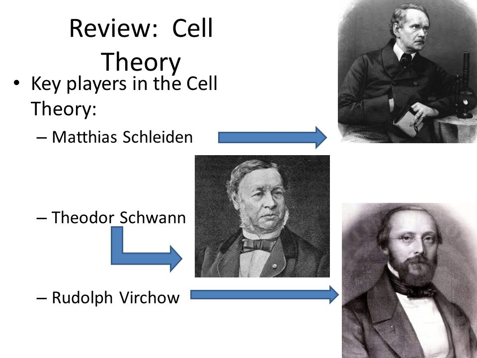 Review: Cell Theory Key players in the Cell Theory: Matthias Schleiden