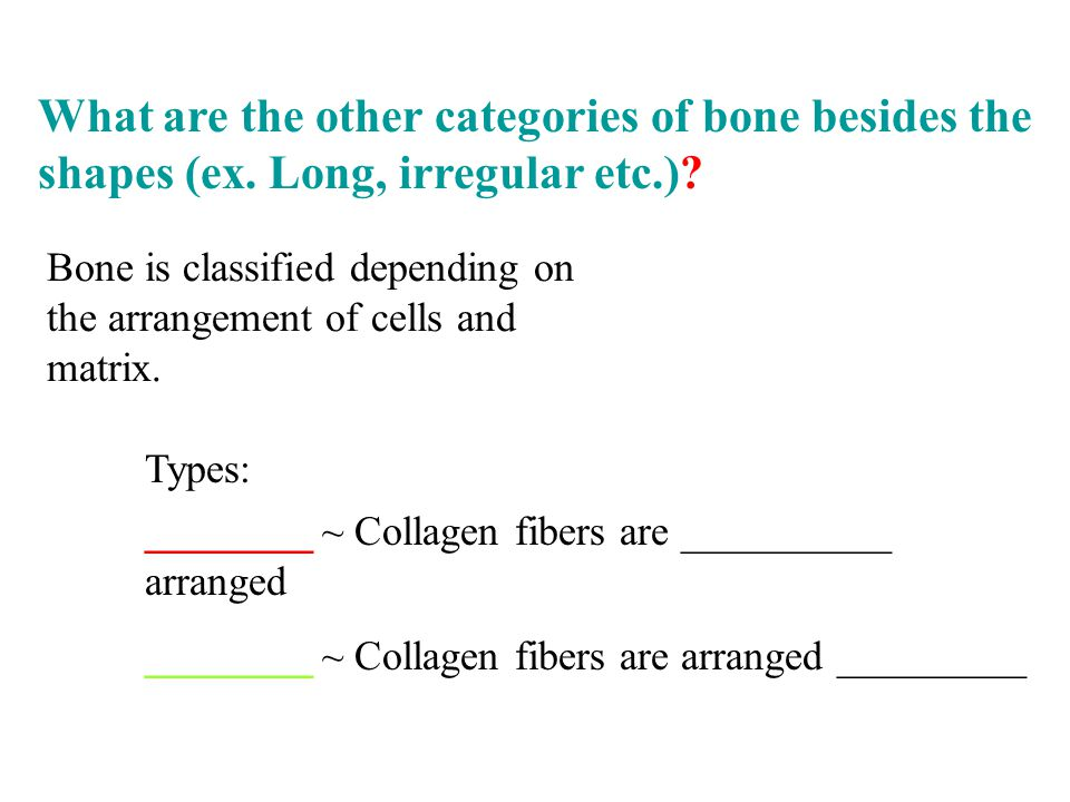 What are the other categories of bone besides the shapes (ex