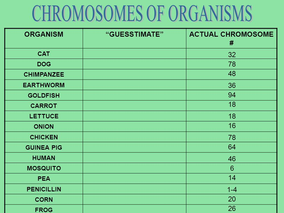 CHROMOSOMES OF ORGANISMS