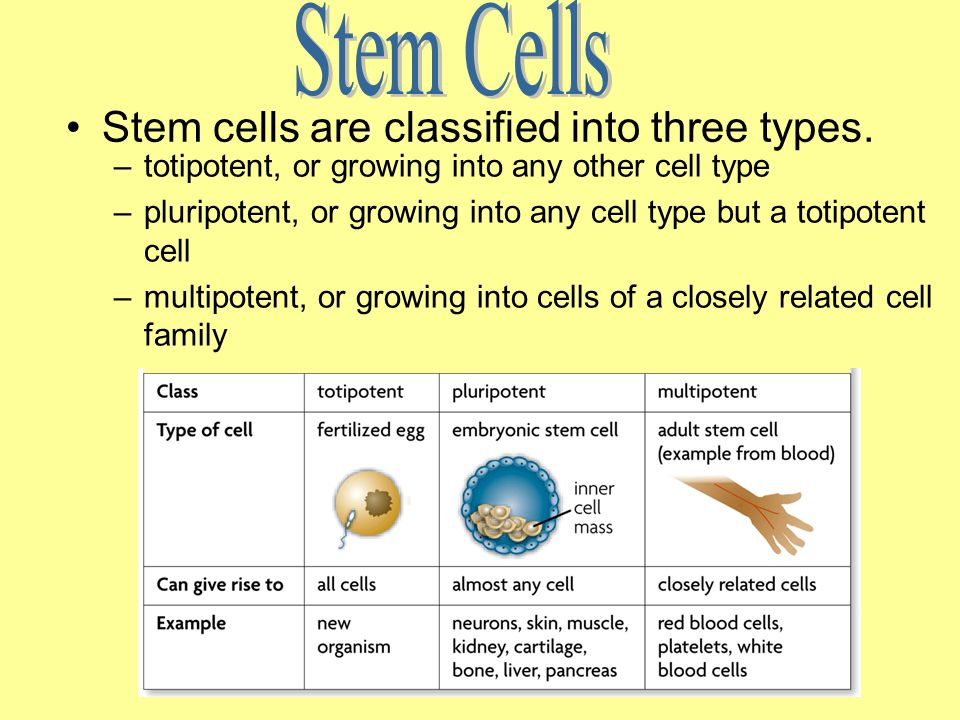 Stem Cells Stem cells are classified into three types.