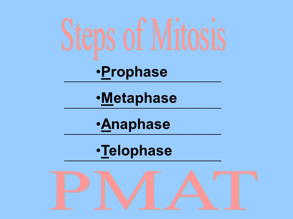 Steps of Mitosis Prophase Metaphase Anaphase Telophase PMAT