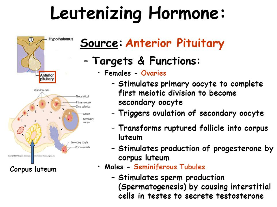 Leutenizing Hormone: Source: Anterior Pituitary Targets & Functions:
