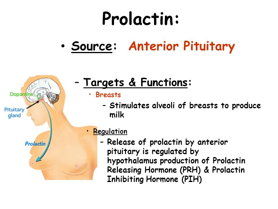 Prolactin: Source: Anterior Pituitary Targets & Functions: