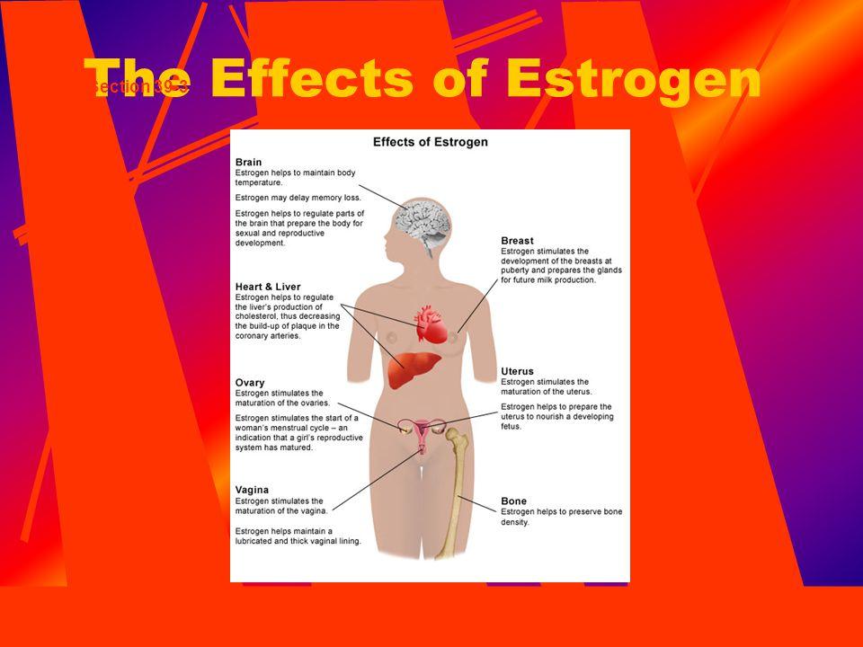 The Effects of Estrogen