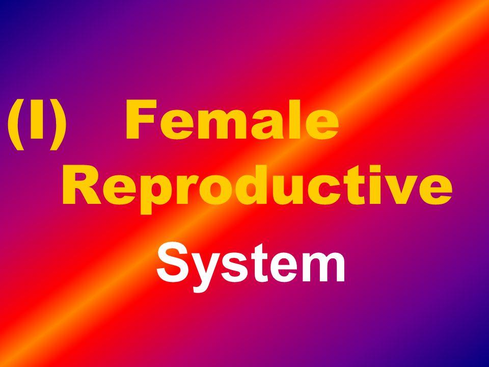 (I) Female Reproductive