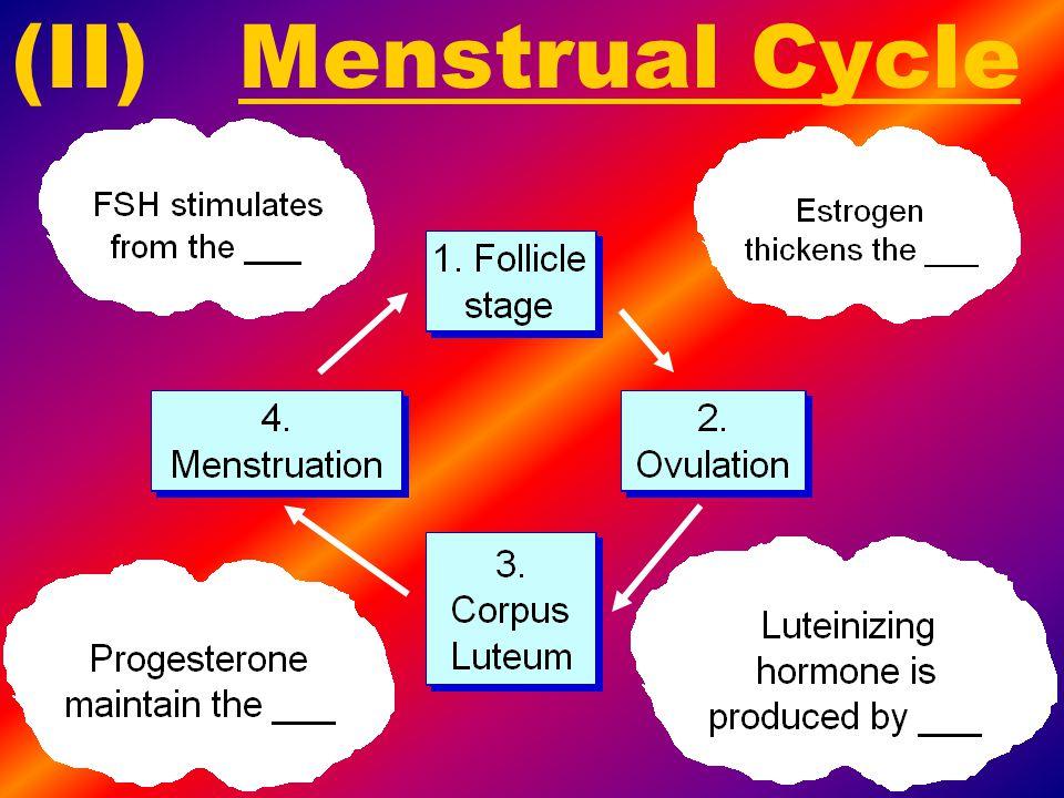(II) Menstrual Cycle