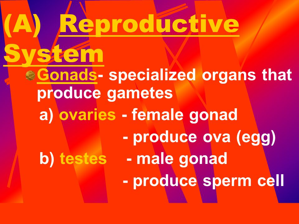 (A) Reproductive System