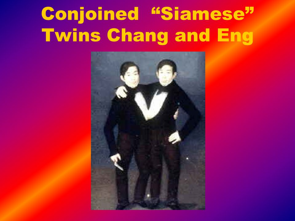 Conjoined Siamese Twins Chang and Eng